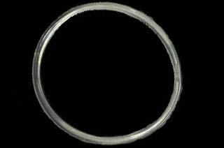Belt -CYCLONE
